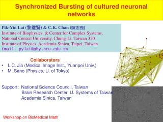 Synchronized Bursting of cultured neuronal networks