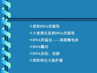 质粒 DNA 的提取 小麦黄化苗核 DNA 的提取 DNA 的鉴定——琼脂糖电泳 DNA 酶切 DNA 回收、连接 质粒转化大肠杆菌