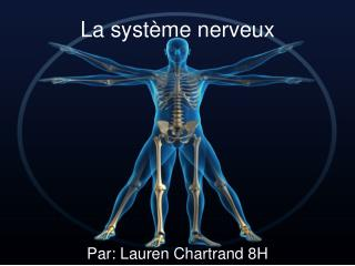 La  système nerveux
