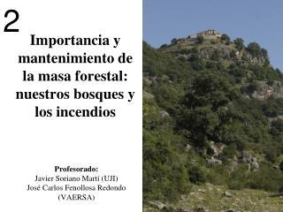 Importancia y mantenimiento de la masa forestal: nuestros bosques y los incendios