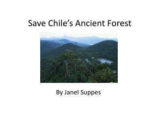 Save Chile�s Ancient Forest