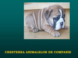 CRESTEREA ANIMALELOR DE COMPANIE