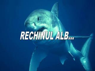 RECHINUL ALB...