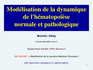 Modélisation de la dynamique de l'hématopoïèse  normale et pathologique
