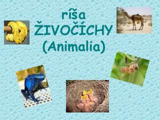 ríša ŽIVOČÍCHY (Animalia)
