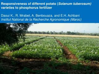 Responsiveness of different potato ( Solanum tuberosum)  varieties to phosphorus fertilizer