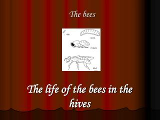 The life of the bees in the hives