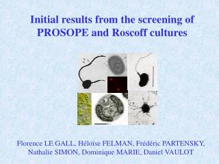 Initial results from the screening of PROSOPE and Roscoff cultures