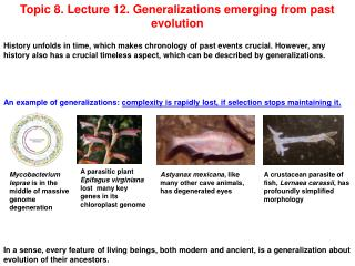 Topic 8. Lecture 12. Generalizations emerging from past evolution