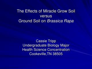 The Effects of Miracle Grow Soil versus Ground Soil on  Brassica Rapa