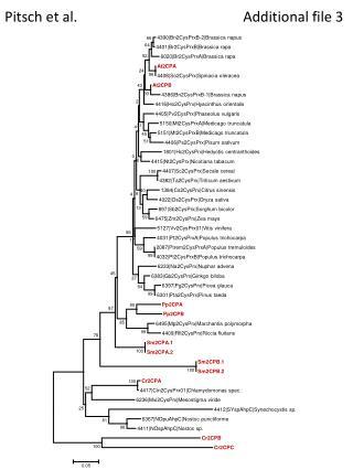 Pitsch et al. Additional file 3