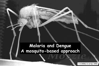 Malaria and Dengue A mosquito-based approach