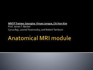 Anatomical MRI module