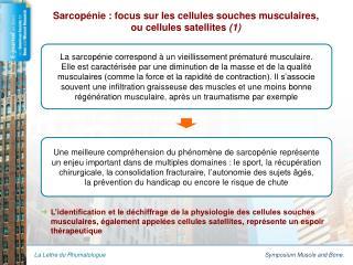 Sarcopénie : focus sur les cellules souches musculaires,  ou cellules satellites  (1)