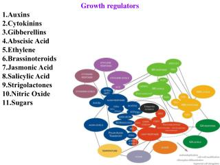 Growth regulators Auxins Cytokinins Gibberellins Abscisic Acid Ethylene Brassinoteroids