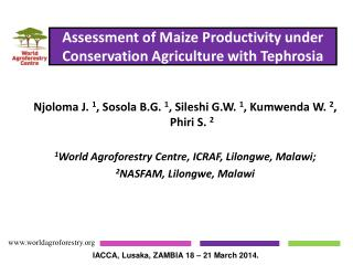 Assessment of Maize Productivity under Conservation Agriculture with Tephrosia