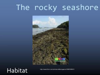 The rocky seashore
