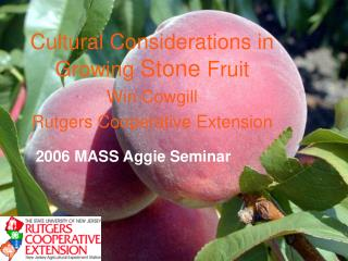 Cultural Considerations in Growing  Stone  Fruit