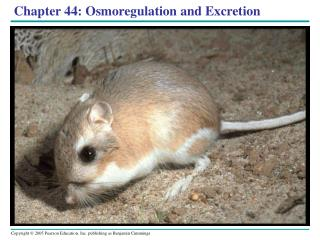 Chapter 44: Osmoregulation and Excretion