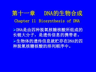 第十一章    DNA 的生物合成  Chapter 11 Biosynthesis of DNA
