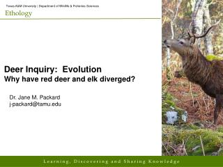 Deer Inquiry:  Evolution Why have red deer and elk diverged?