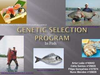 Genetic Selection Program