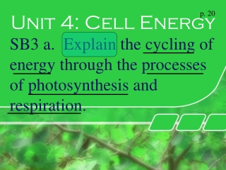 Unit 4: Photosynthesis and Respiration