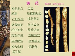 黄 芪 Radix Astragali