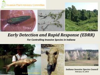 Early Detection and Rapid Response (EDRR) For Controlling Invasive Species in Indiana