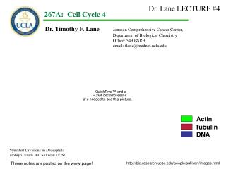 Dr. Timothy F. Lane  Jonsson Comprehensive Cancer Center,  			Department of Biological Chemistry