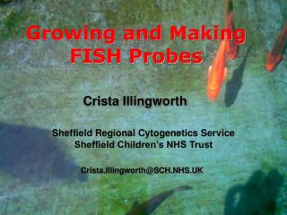 Growing and Making FISH Probes