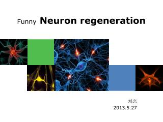 Funny  Neuron regeneration