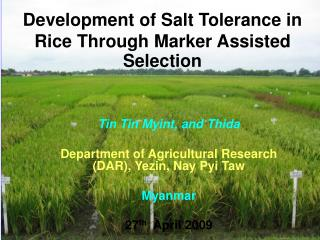 Development of Salt Tolerance in Rice Through Marker Assisted Selection
