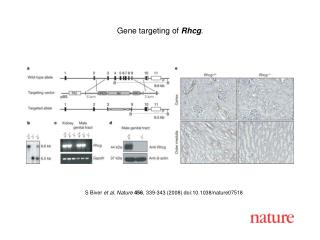 S Biver  et al. Nature 456 , 339-343 (2008) doi:10.1038/nature07518