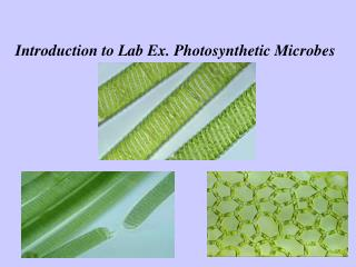 Introduction to Lab Ex. Photosynthetic Microbes