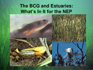 The BCG and Estuaries: What's In It for the NEP