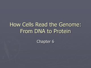 How Cells Read the Genome:  From DNA to Protein