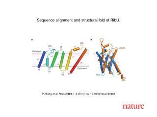 P Zhang  et al .  Nature 000 ,  1 - 4  (2010) doi:10.1038/nature0 9488