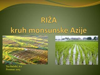RIŽA kruh monsunske Azije