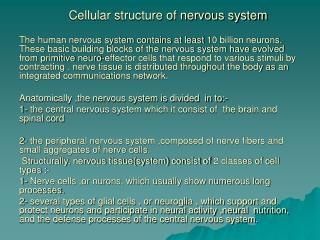 Cellular structure of nervous system