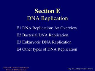 Section E DNA Replication