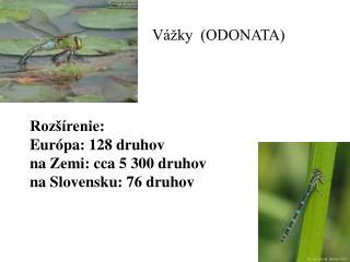 Odonata VáVžky Rozšírenie: Európa: 128 druhov na Zemi: cca 5 300 druhov na Slovensku: 76 druhov