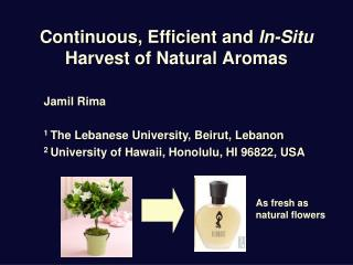 Continuous, Efficient and  In-Situ  Harvest of Natural Aromas