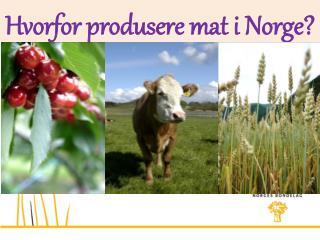 Hvorfor produsere mat i Norge?