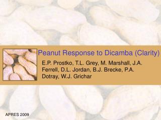 Peanut Response to Dicamba (Clarity)