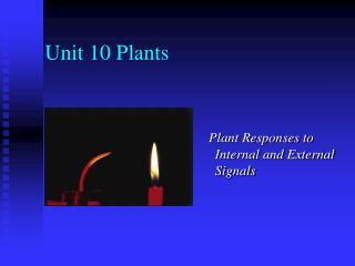 Unit 10 Plants