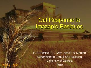 Oat Response to  Imazapic Residues