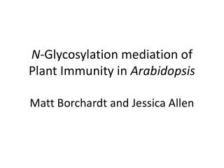 N -Glycosylation mediation of Plant Immunity in  Arabidopsis Matt Borchardt and Jessica Allen