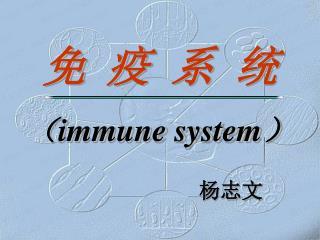 免  疫  系  统 ( immune system )