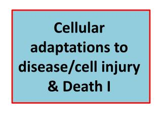 Cellular adaptations to disease/cell injury & Death I